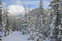 Mount Rainier (volcano) through a winter forest von Ed Book