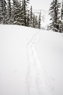 Snowshoe Tracks at Paradise on Mt Rainier by Ed Book