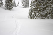 Snowshoe Tracks at Paradise on Mt Rainier 2 by Ed Book