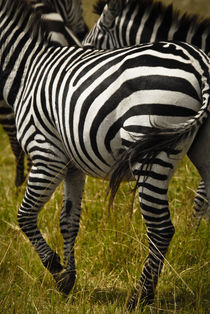 Zebra Stripes & Tail von Russell Bevan Photography