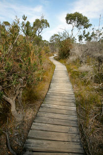WInding boardwalk across the scrub - Freycinet, Australia by Jess Gibbs