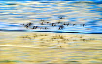 Shore Birds In Motion by Paul Lemke