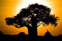 African sunset 2 by Leandro Bistolfi