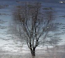 Tree in the water by Jacek Maczka