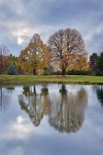 Pond Reflection by Paul Lemke