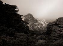 Point Lobos #4 by Ken Dvorak