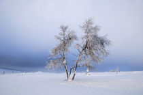 the lonely tree by Jean du Boisberranger