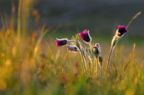 bunch of wild flowers by Jean du Boisberranger
