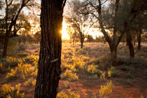 Sun goes down over the desert - Mungo, Australia von Jess Gibbs
