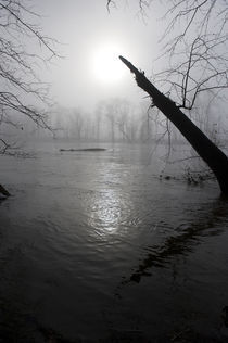 Fog on the Shenandoah River by Douglas Graham