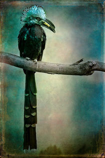 Finer-feathered-friend-4