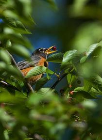 Birds-8052309