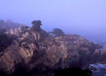 Point Lobos #6 by Ken Dvorak