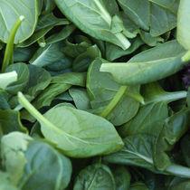 Spinach von James Menges