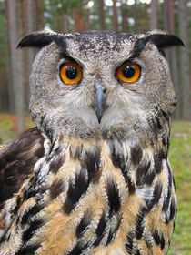 Big owl by Mati  Kose