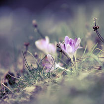 kleines Leben by Eva Stadler