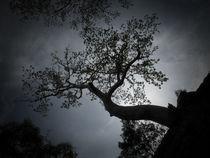 Skytree von Phil  Caldwell