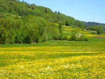 Frühlingswiese von Erik Mugira