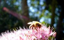 Biene von Erik Mugira