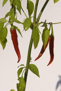 Hot Plant von Simon Littlejohn
