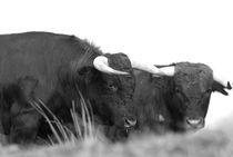 All Bull von Simon Littlejohn
