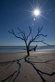 DEAD TREES ON BEACH, SUNBURST by Wolfgang Kaehler