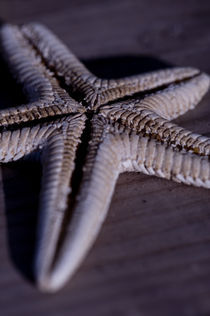 Starfish by Simon Littlejohn