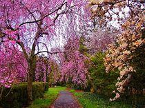 Reynolda Gardens Reverie von Deborah Willard