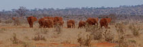 Red-elephants-tsavo-kenya