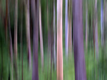 Purple Forest Impression von Kitsmumma Fine Art Photography