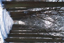 Trees von Edouard Moreels