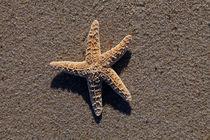 Starfish #1 von Christopher Seufert