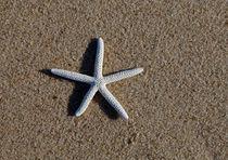 Starfish #2 by Christopher Seufert