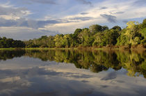Amazon Rainforest by Wolfgang Kaehler