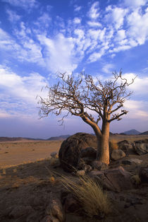 Tree in Desert by Wolfgang Kaehler