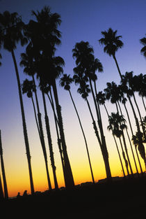 Palm Trees at Sunset von Melissa Salter