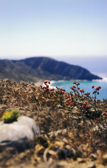 Natural Landscape, Channel Islands National Park by Melissa Salter