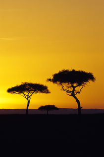 Masai Mara Sunset by Wolfgang Kaehler