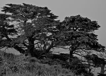 Point Lobos #17 by Ken Dvorak
