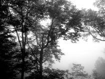 Fog-in-black-and-white