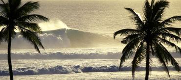 Gold-palms