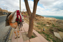 Mule in the Old City of Mardin / Southeast Turkey von Benjamin Hiller