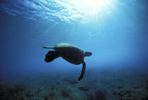 Pipeline Turtle von Sean Davey