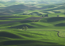 The rolling Palouse Hills of  eastern Washington von Danita Delimont