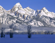 WYOMING. USA. Fog & frosted trees below Grand Teton National Park in winter by Danita Delimont