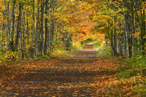 USA, Michigan, Upper Peninsula. Roadway into fall foliage. Credit as von Danita Delimont
