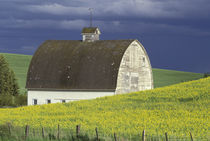 NA, USA, Idaho, south of Genesse Canola field and old white barn by Danita Delimont