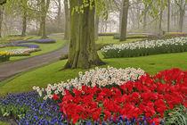 Tulips and daffodils, Keukenhof Gardens, Lisse, Netherlands von Danita Delimont