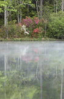 Azaleas relfecting in a pond during early morning, Georgia, USA von Danita Delimont