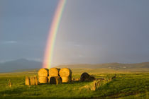 Briiliant rainbow over hay bales along the Judith mountain Range,  near Montana by Danita Delimont